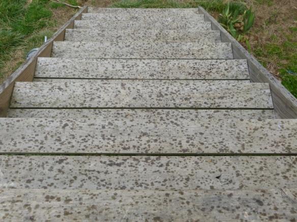 rain steps