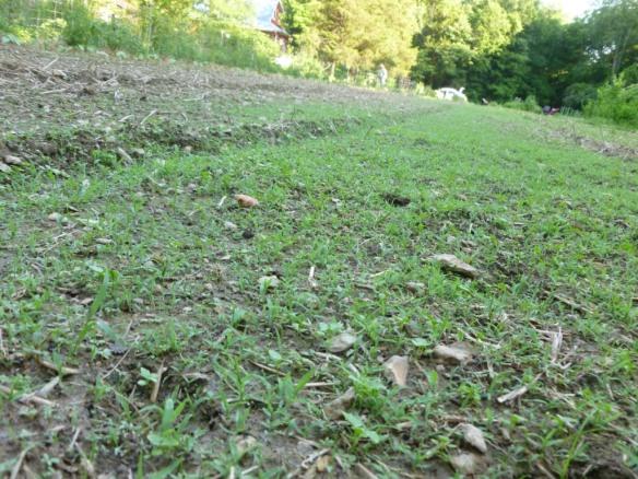 weeds long