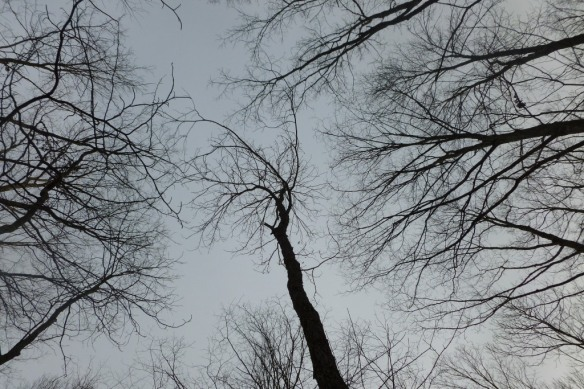 canopy empty