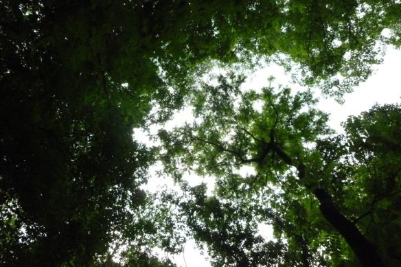full canopy
