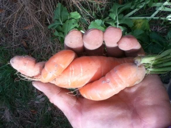 carrot love...