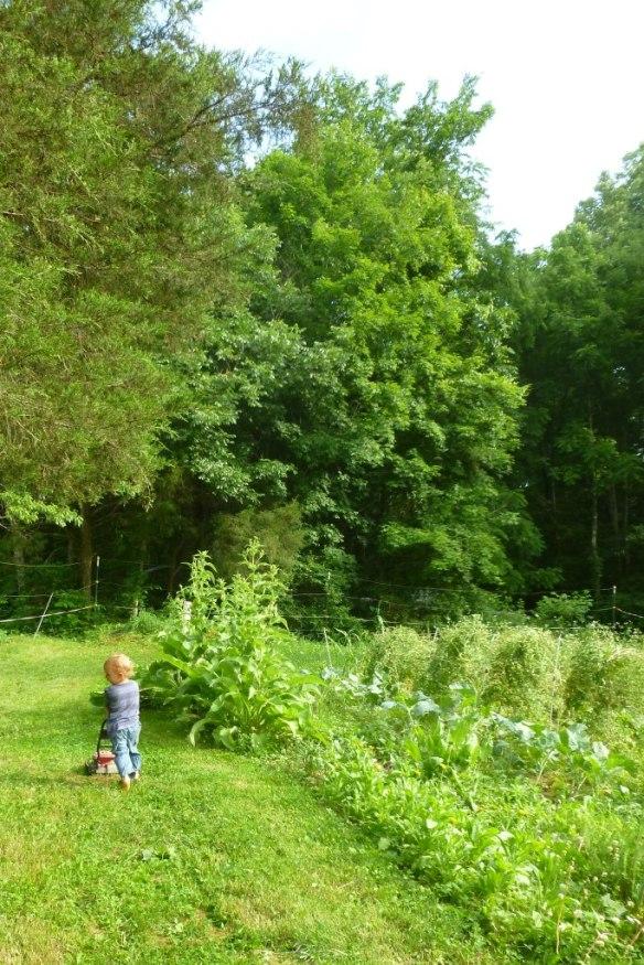 summer mowing memory