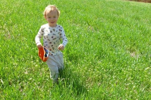 levon in cover crop