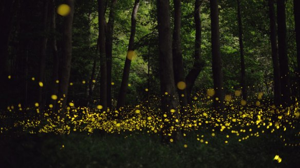 long-exposure-photos-of-fireflies-at-night-tsuneaki-hiramatsu-6