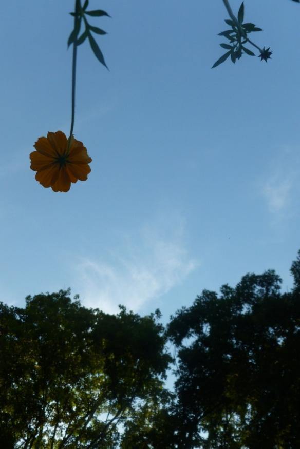 opening flower