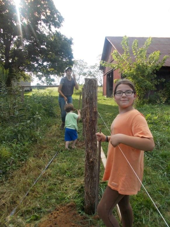 all farm harvested cedar posts