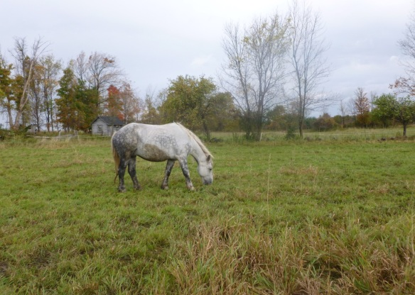 eichman horse