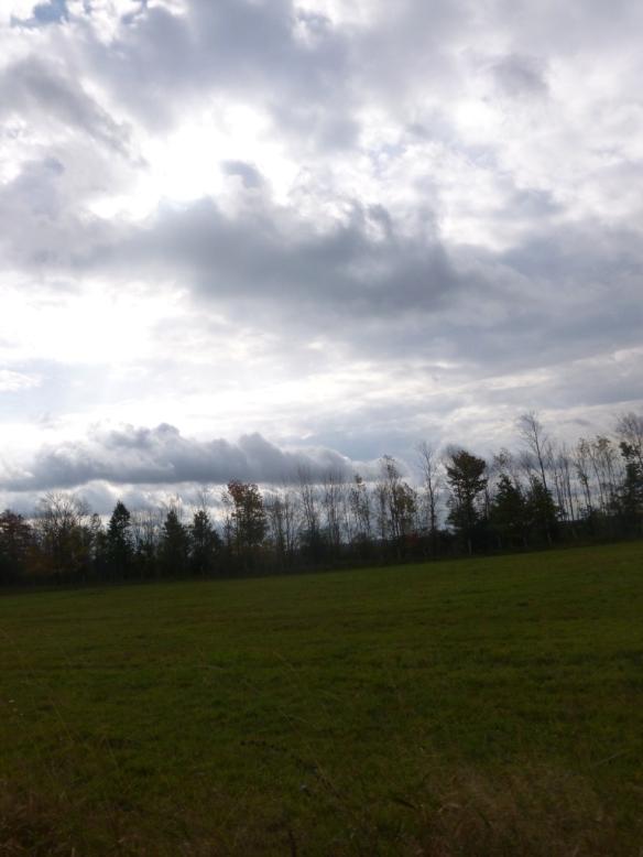 eichman landscape