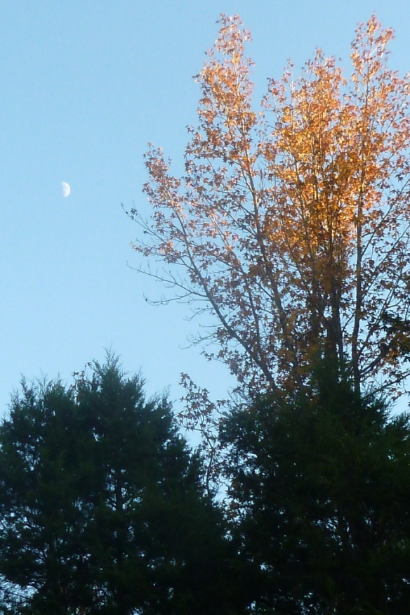 plenty moon in trees
