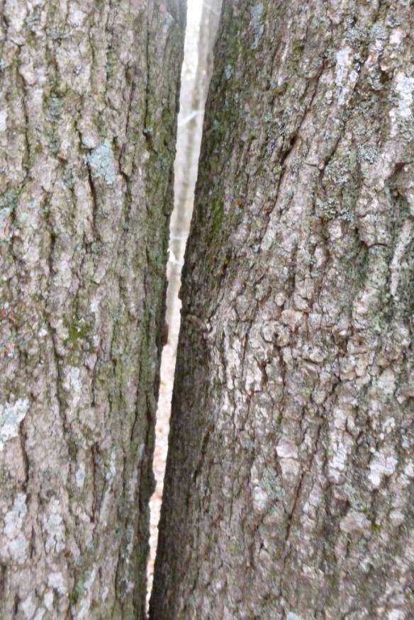 close trees
