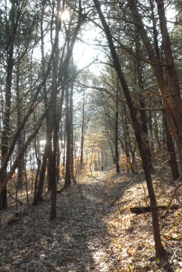 levon in trees