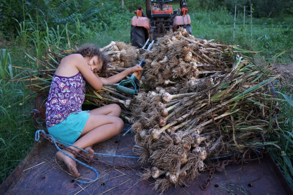 https://radicalfarmwives.files.wordpress.com/2015/06/garlic-patch-2.jpg