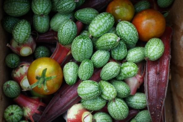 mexican sour gherkins 2