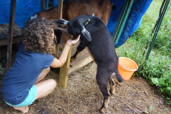 milking 5