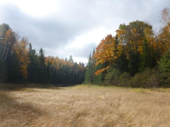 canada swamp walk
