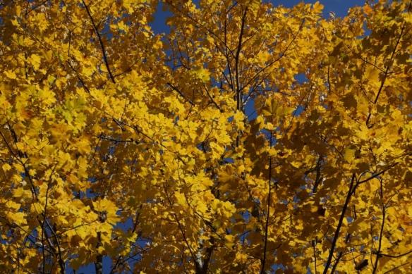 canada yellow