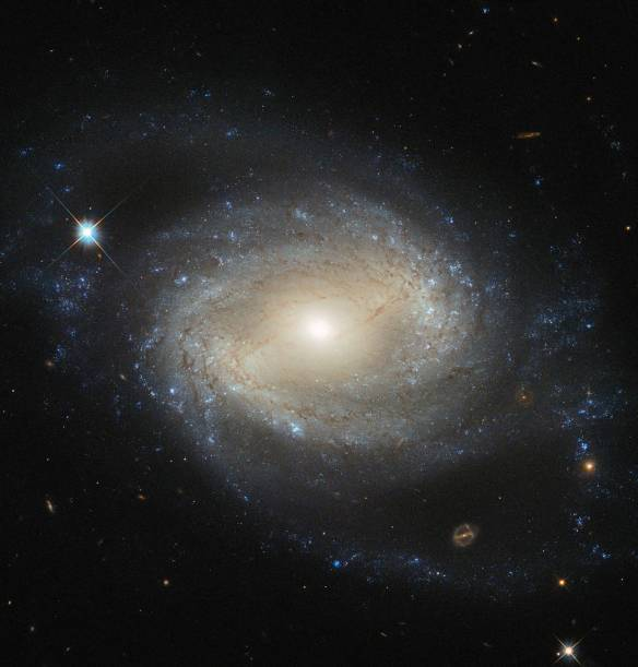 NGC 4639 is a beautiful example of a type of galaxy known as a barred spiral. It lies over 70 million light-years away in the constellation of Virgo and is one of about 1500 galaxies that make up the Virgo Cluster. In this image, taken by the NASA/ESA Hubble Space Telescope, one can clearly see the bar running through the bright, round core of the galaxy. Bars are found in around two thirds of spiral galaxies, and are thought to be a natural phase in their evolution. The galaxy's spiral arms are sprinkled with bright regions of active star formation. Each of these tiny jewels is actually several hundred light-years across and contains hundreds or thousands of newly formed stars. But NGC 4639 also conceals a dark secret in its core — a massive black hole that is consuming the surrounding gas. This is known as an active galactic nucleus (AGN), and is revealed by characteristic features in the spectrum of light from the galaxy and by X-rays produced close to the black hole as the hot gas plunges towards it. Most galaxies are thought to contain a black hole at the centre. NGC 4639 is in fact a very weak example of an AGN, demonstrating that AGNs exist over a large range of activity, from galaxies like NGC 4639 to distant quasars, where the parent galaxy is almost completely dominated by the emissions from the AGN.