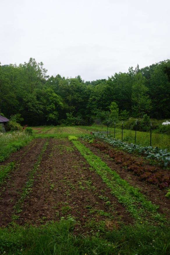 garden enough